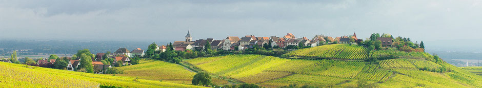 Paysage Champêtre, village viticole en Alsace - Dominique MAYER - www.dominique-mayer.com