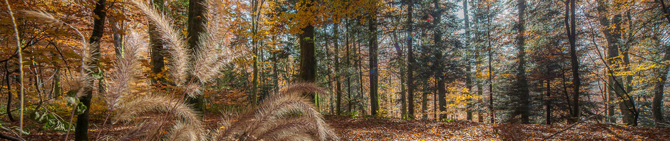 Paysage forestier des Vosges en automne - Dominique MAYER - www.dominique-mayer.com