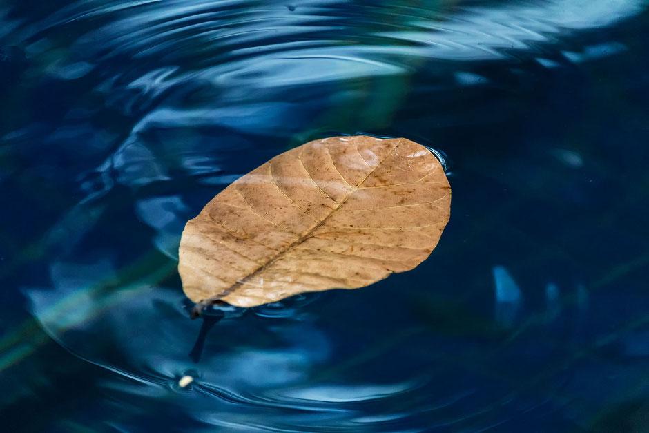 blatt-schwimmt-im-blauen-wasser
