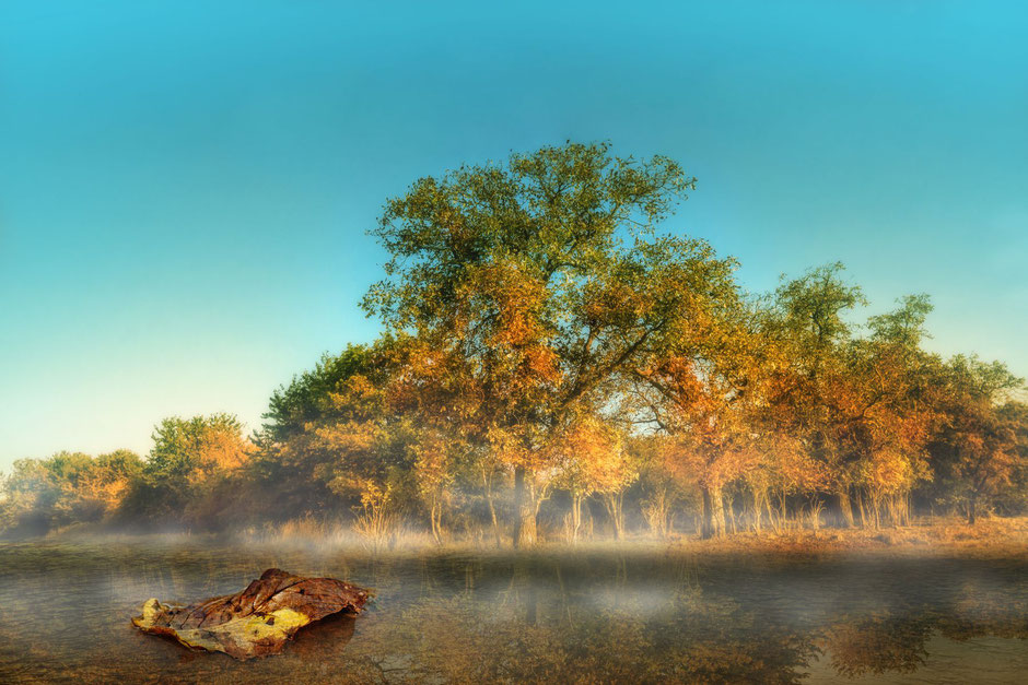 Herbstblatt im Wasser vor Bäumen im goldenen Licht