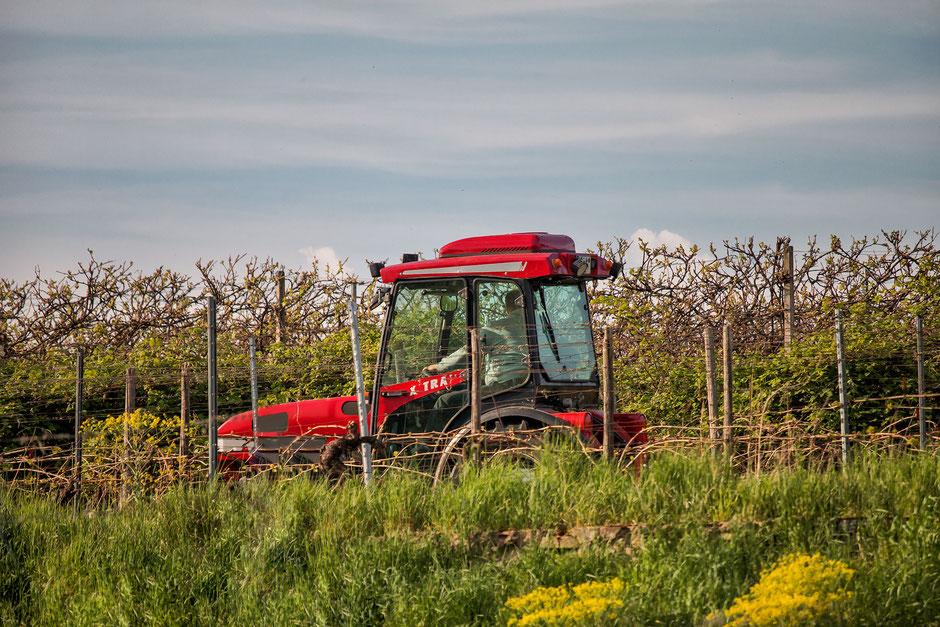 traktor-in-den-weinbergen
