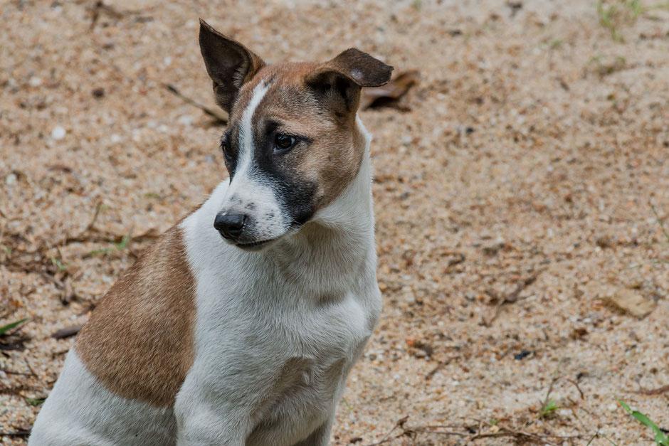 mischlingshund-welpe