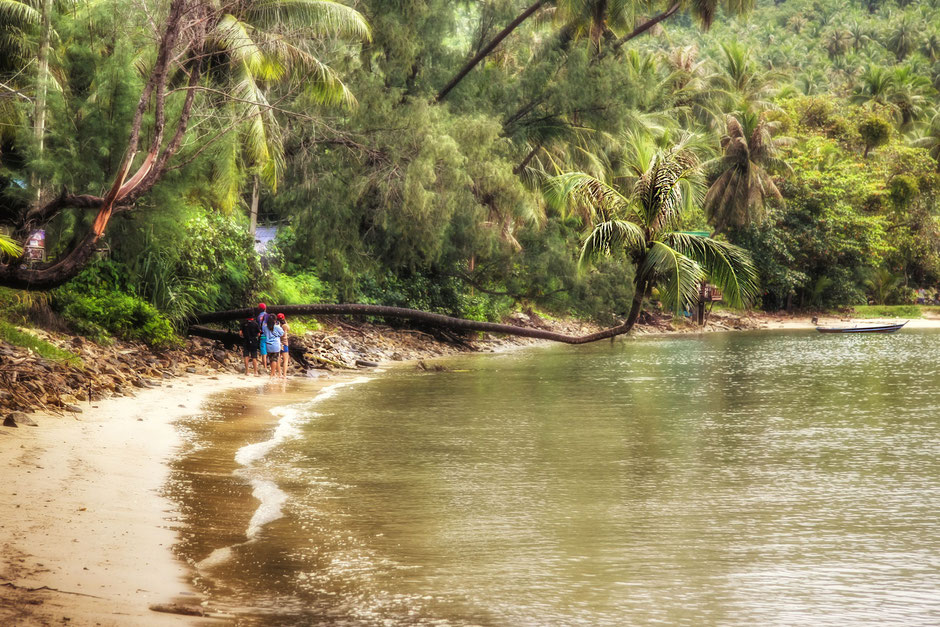 bucht-auf-koh-phangan-palme-im-wasser