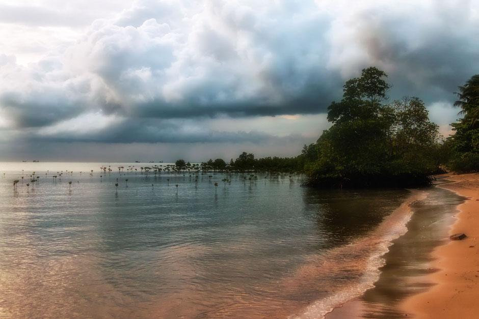 mangroven-am-strand-von-wok-tum-koh-phanghan