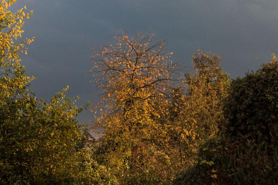 herbstbaeume-unter-dunklem-himmel