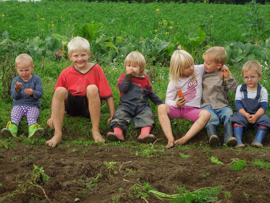 Kinder helfen bei der Kartoffelernte am Biobauernhof Stadler