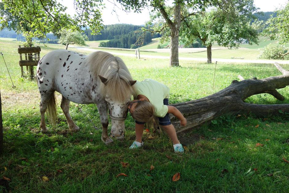 Pony Moni am Biohof Stadler