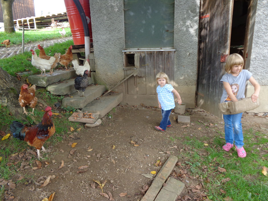 Hühner füttern am Biobauernhof Stadler