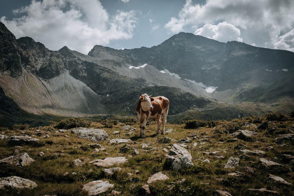 Wandern-Österreich-Salzburg-Alm-Wanderung