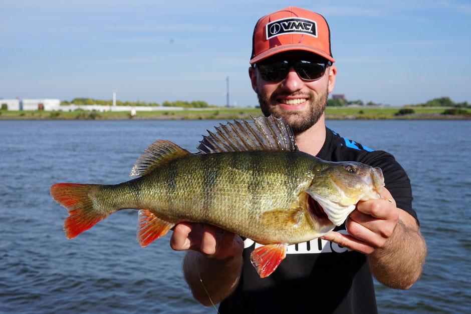 Johannes Höfner (JH FISHING) mit Flussbarsch, 43cm, aus dem Schelde-Rhein-Kanal (Niederlande) vom 24. September 2018