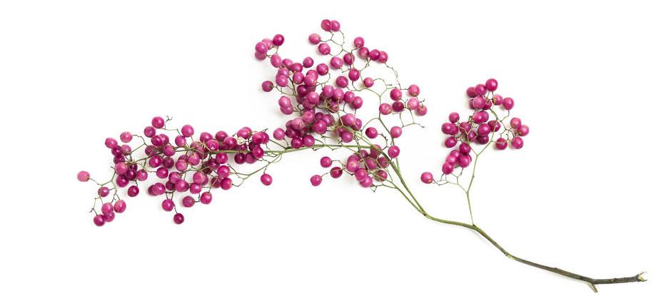 Rosa Pfeffer, Schinusfrucht