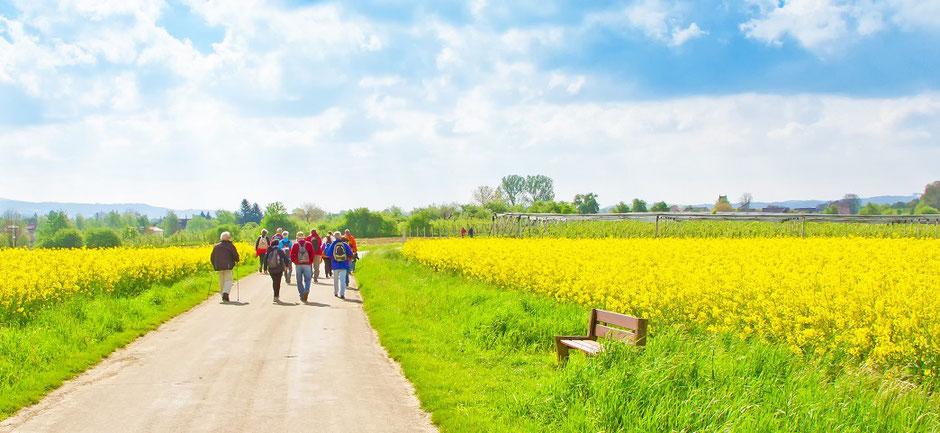 Eine Gruppe von Wanderern an einem Frühlingstag im Deutschlandurlaub gut geschützt mit einer günstigen Gruppen-Reiseversicherung der ERGO