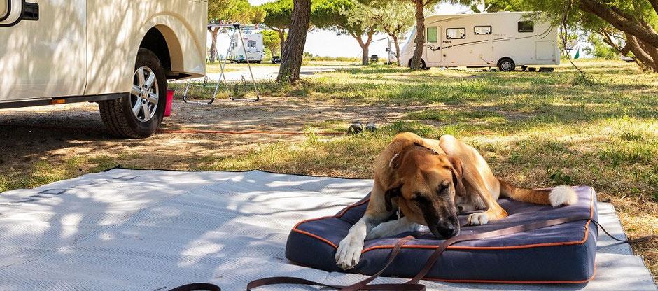 Kranker Hund liegt vor dem Wohnmobil. Gut dass er mit krankenversichert ist in der Camping-Reiserücktritts-Versicherung der ERGO.