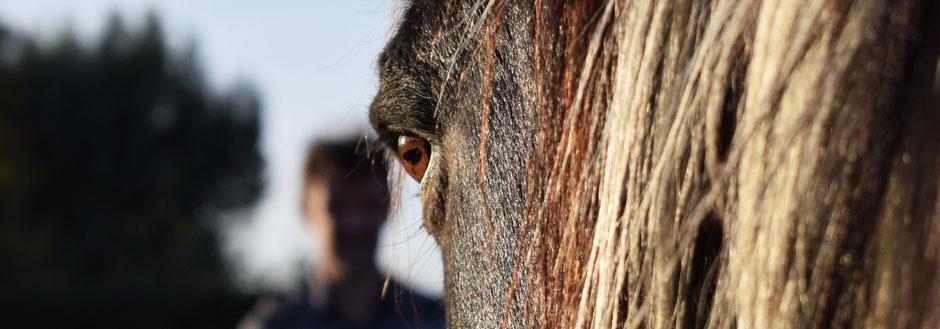 Reiki mit Pferden, Belgien