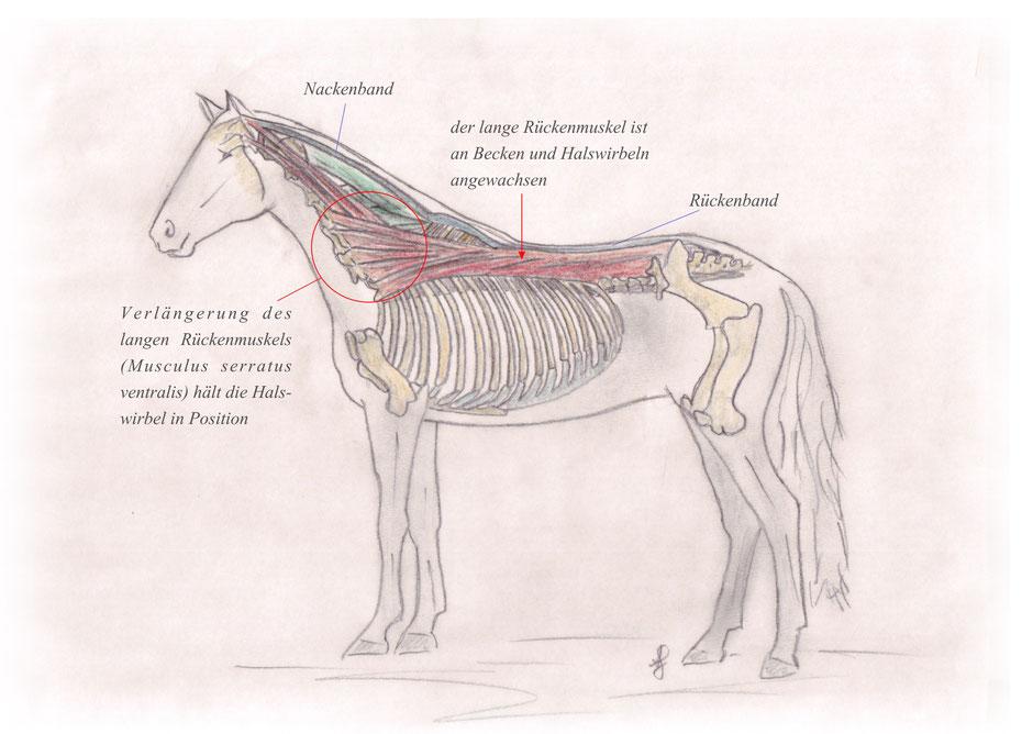Beispiele und Erklärungen - pferdetraining-muenchens Webseite!