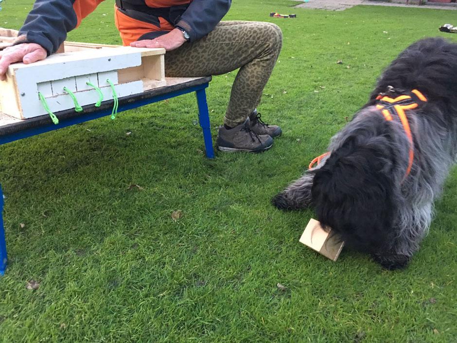 Hondenschool Rotterdam hersenwerk fun4paws