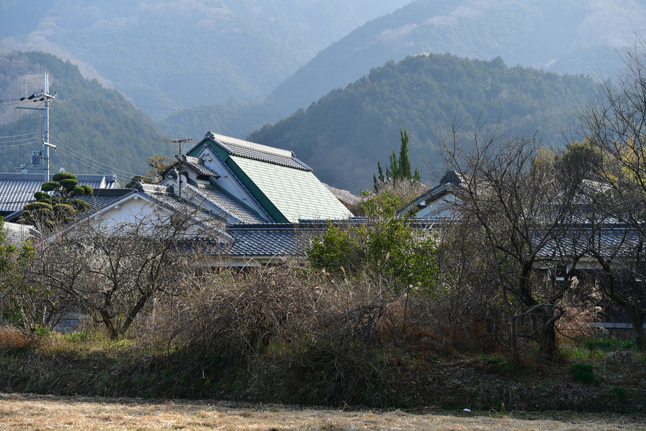 Nijo-zan Mountain has been quietly looking down the village from the ancient time.