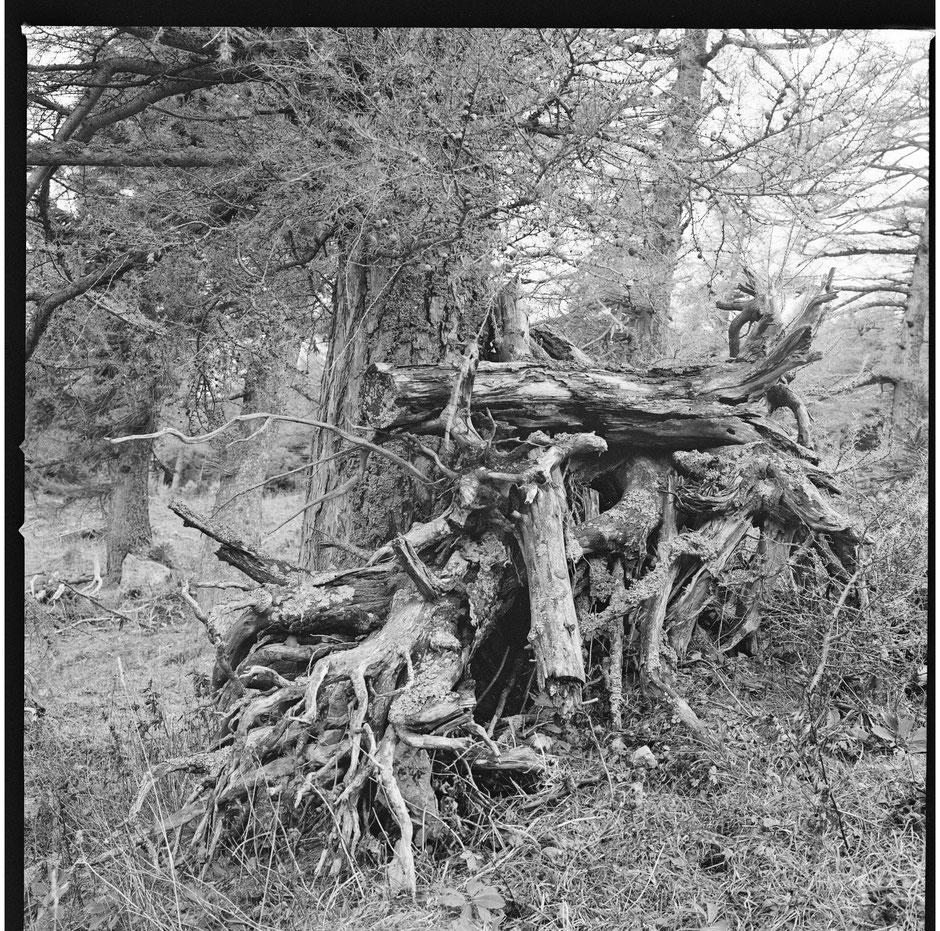 Foto: VN Jaeger © Trees, 30 x 30 cm, 2020