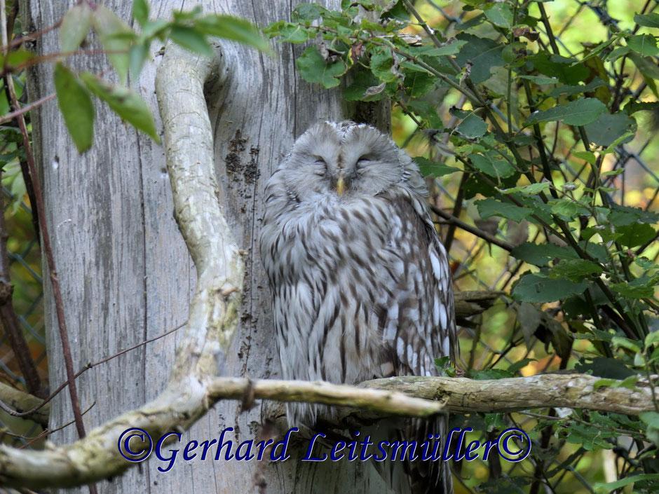Wanderung im Naturpark am Lusen am 25.09.2017
