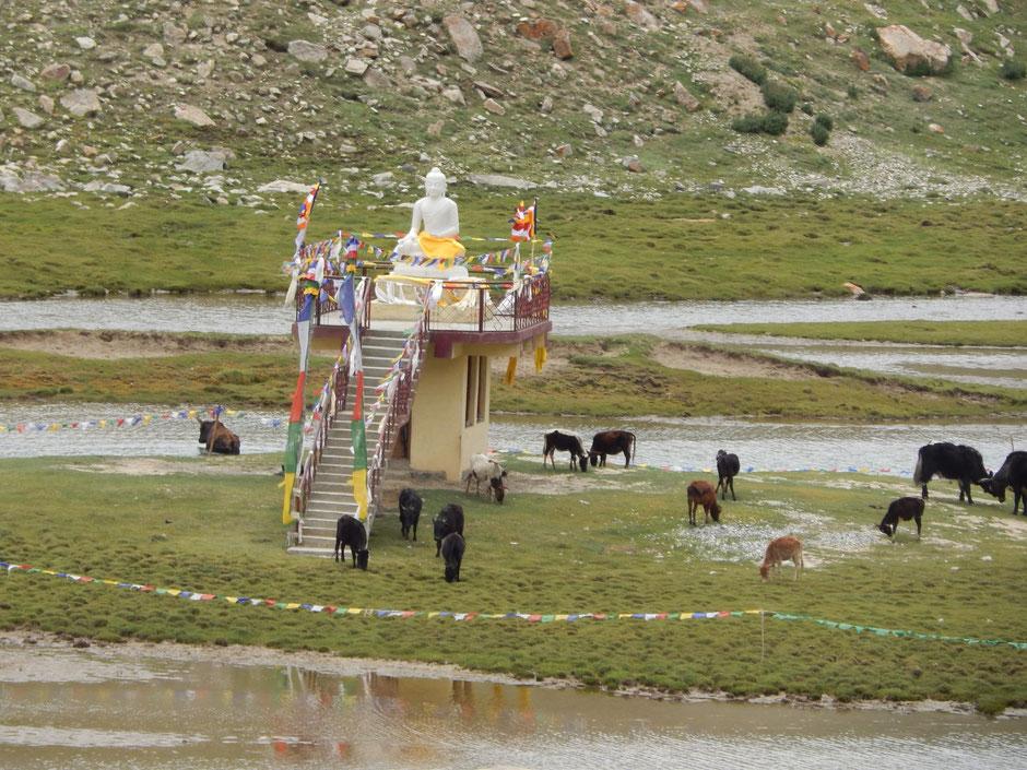 Retraite yoga, méditation et rencontres spirituelles au Ladakh avec JYOTI-YOGI