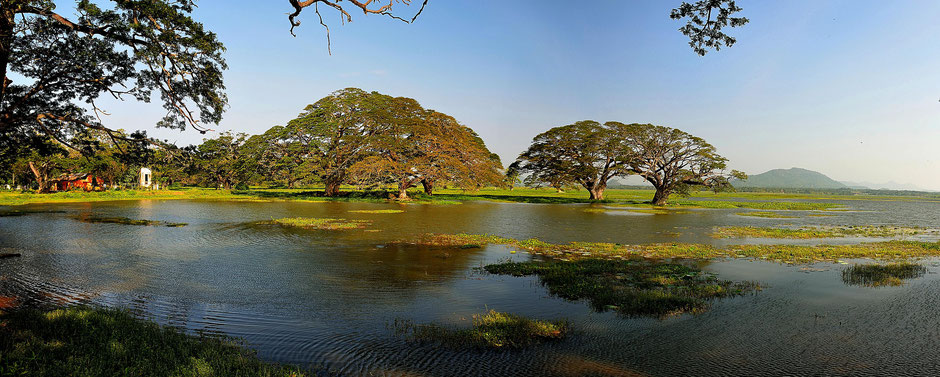 sri lanka,bäume,see,wasser,panorama,haus,landschaft,rural,seelandschaft,seascape,reisen,travel,tourism,Yala , National Park,safari,panoramic,idylle,grün,landscape, urlaub,rundreise,