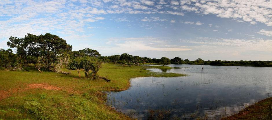 yala ,national park,safari,wild tiere,sri lanka,bäume,wasser,see,landschaft,wald,tropen,reisen,urlaub,erleben,expore,seascape,landscape,travel,cloudy sky,blau, wolken, wiese,grass,natürlich, rundresie.asien,panorama