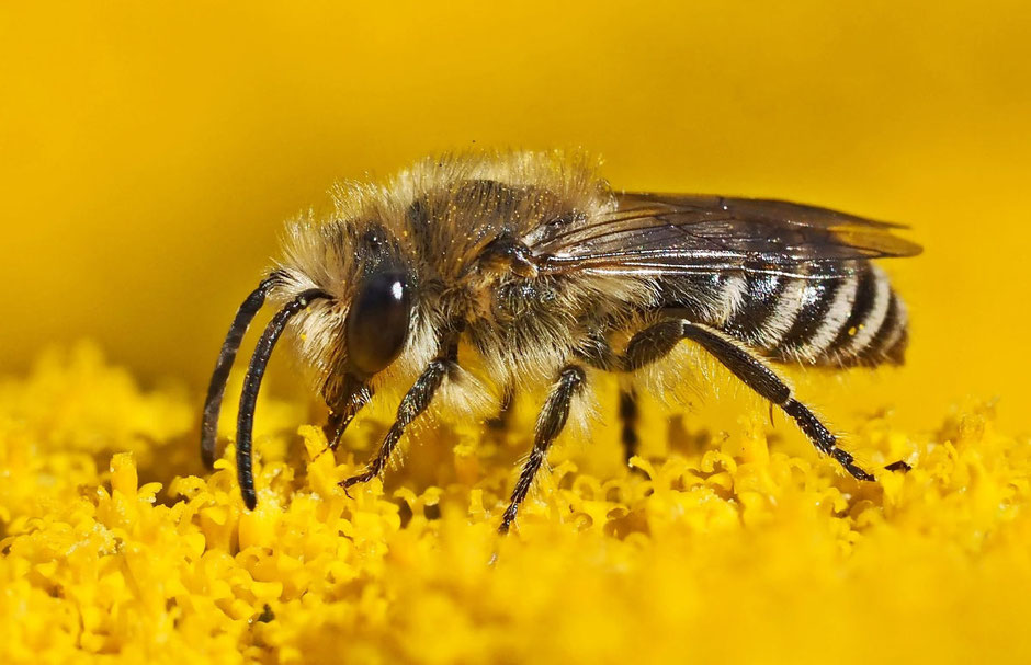 Biene auf einer Blume