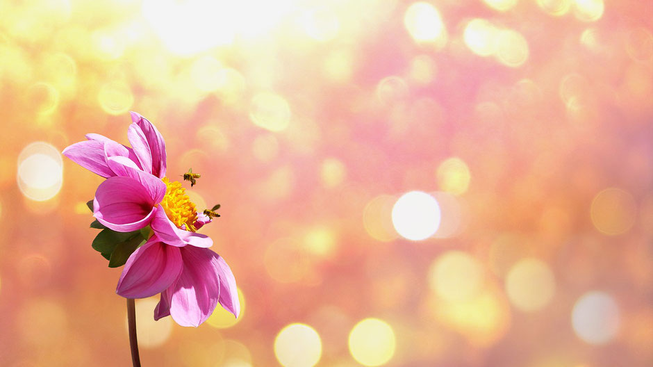 Blume mit Bienen