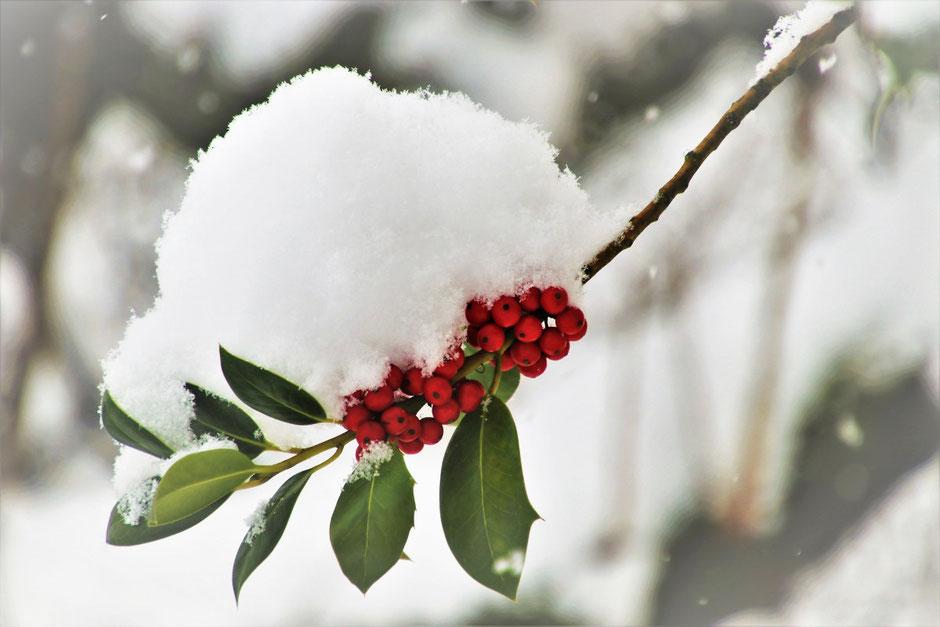 Pflanzen im Winter von der Schneelast befreien
