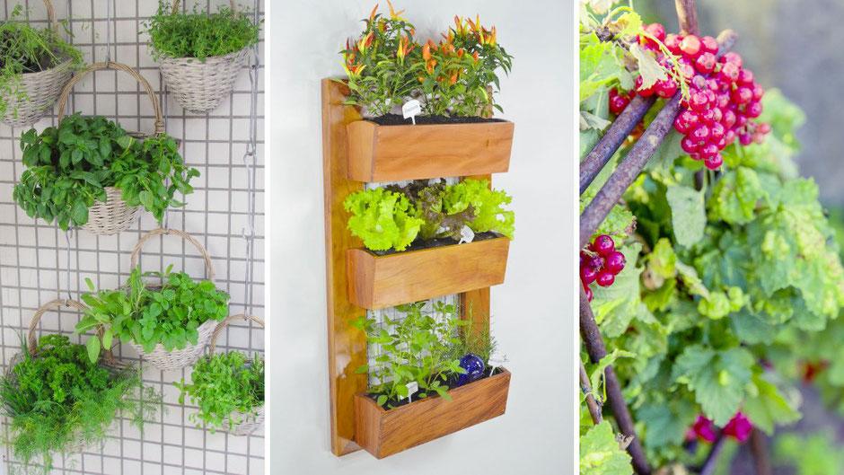 Vertikale Balkon Garten Ideen