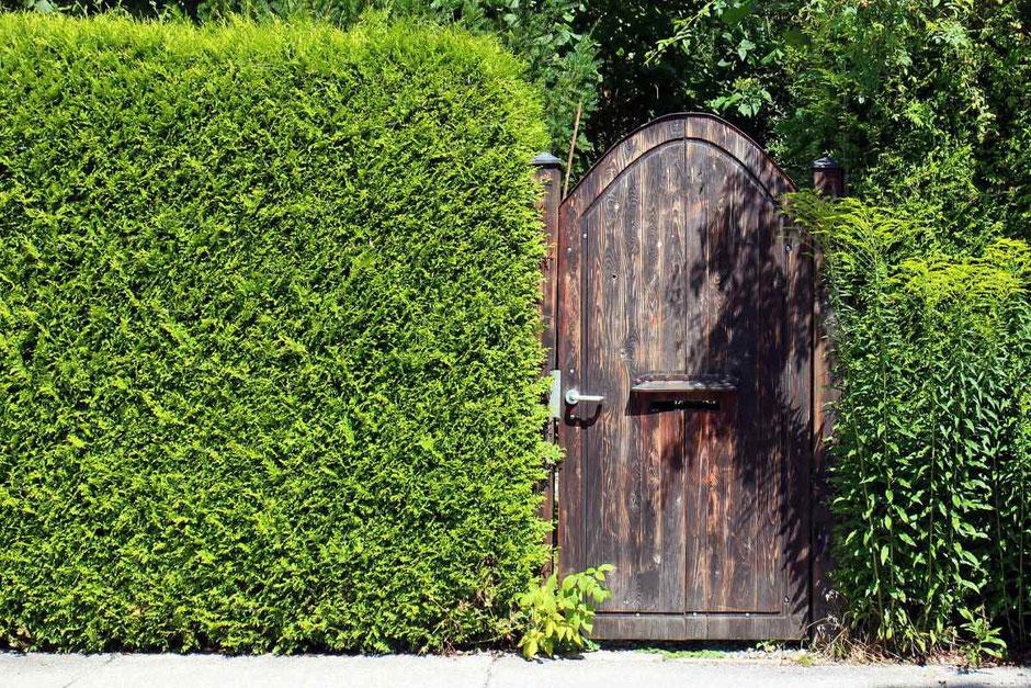 Sichtschutz mit Hecken im eigenen Garten