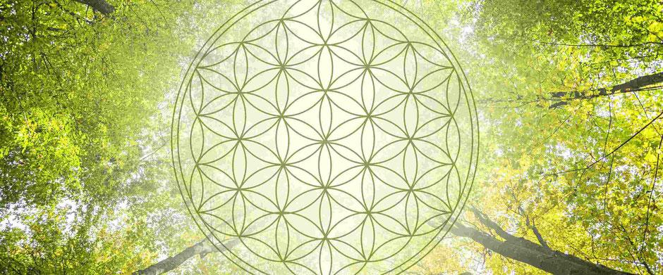 Auf dem Foto ist die Blume des Lebens abgebildet, sie versinnbildlicht den Kreislauf des Lebens und Ganzheitlichkeit des Körpers. Körper, Geist und Seele sind miteinander verbunden.