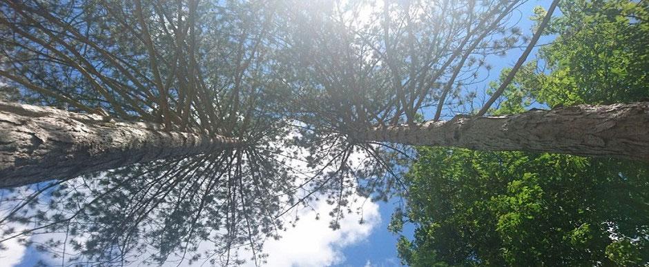 Auf dem Bild sind Bäume mit einem blauen Himmel zu sehen. Das Bild befindet sich auf der Startseite, da es das Titelbild des Blogs ist und den Besucher zum Homöopathie Blog führen soll. Im Blog von Tanja Jeken stehen Artikel zu diversen Themen.