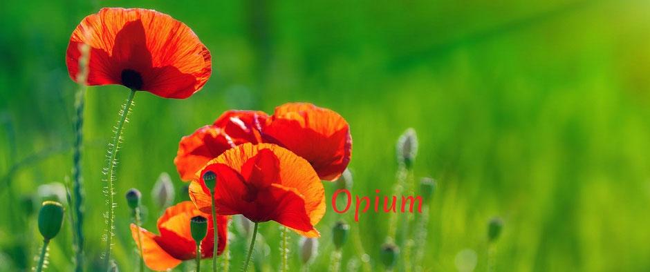 Behandlung bei akuten Erkrankungen. Der Saft der Mohnblume (Opium) wird auch als homöopathisches Arzneimittel verwendet.