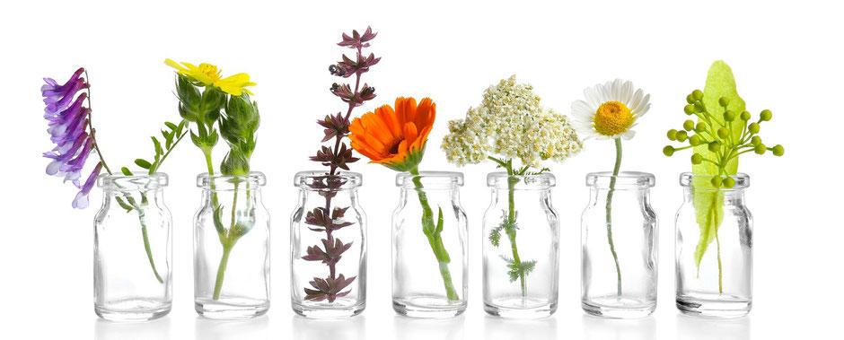 Auf dem Foto sind unter anderem die Pflanzen Chamomilla und Calendula zu sehen. Diese homöopathischen Arzneimittel finden bei mir in der Praxis für klassische Homöopathie in Hamburg Verwendung.
