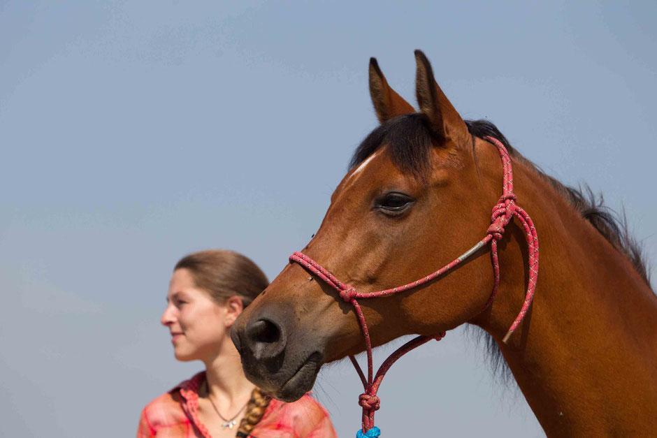 Pferd und Mensch in Harmonie