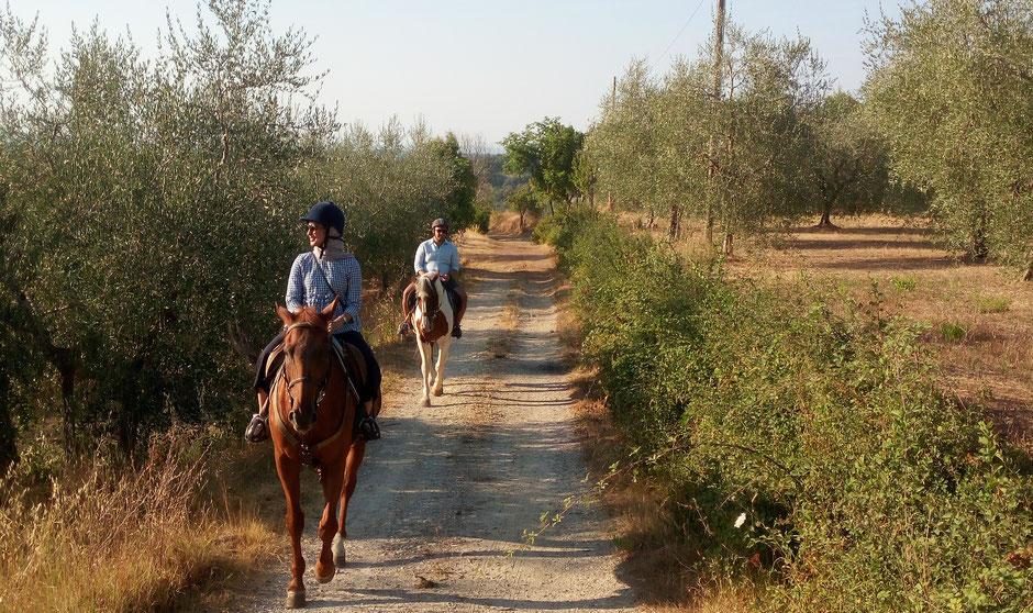 Horseback riding experience near Siena