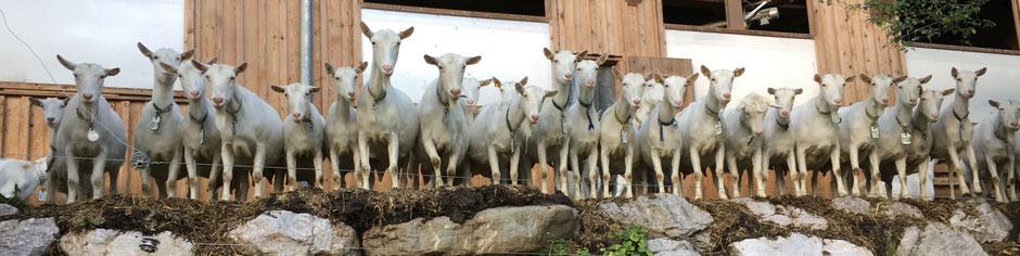 Grüblerhof Familie Feßl | Auszeit am Bauernhof | Ziegen
