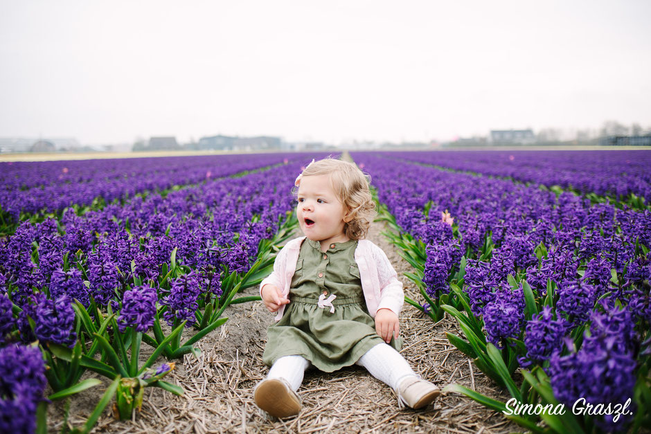 purple hyacinth photography voorhout