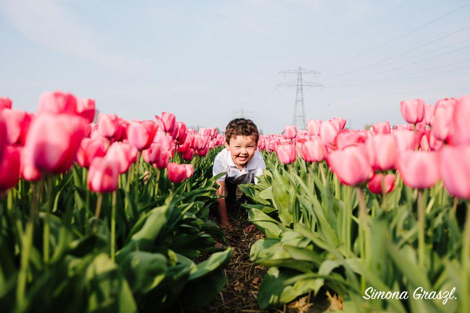 happy boy pink tulips Voorhout