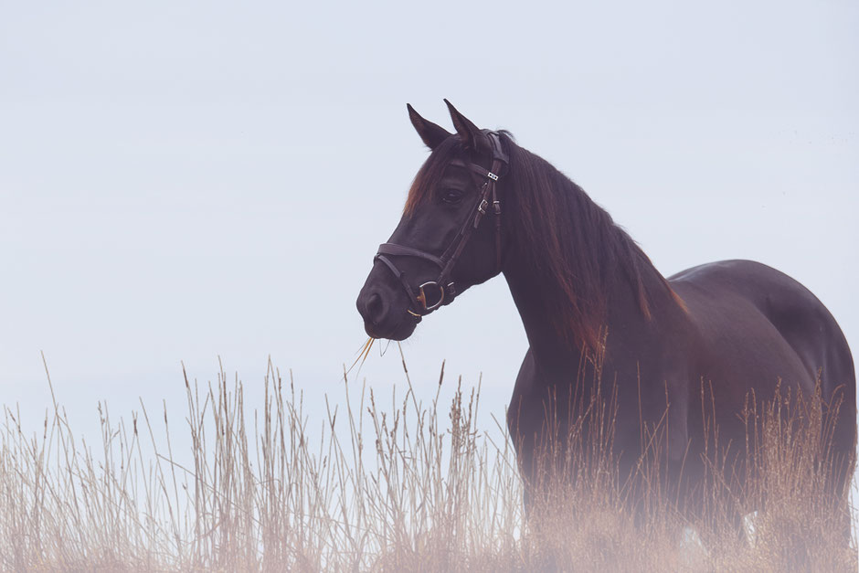 http://www.yeguada-estrellita.de/unsere-pferde/zuchtstuten/