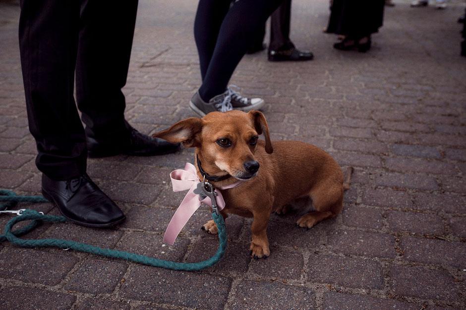 Hund bei einer Trauung