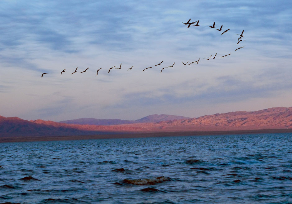 flying geese - visualsspeak image