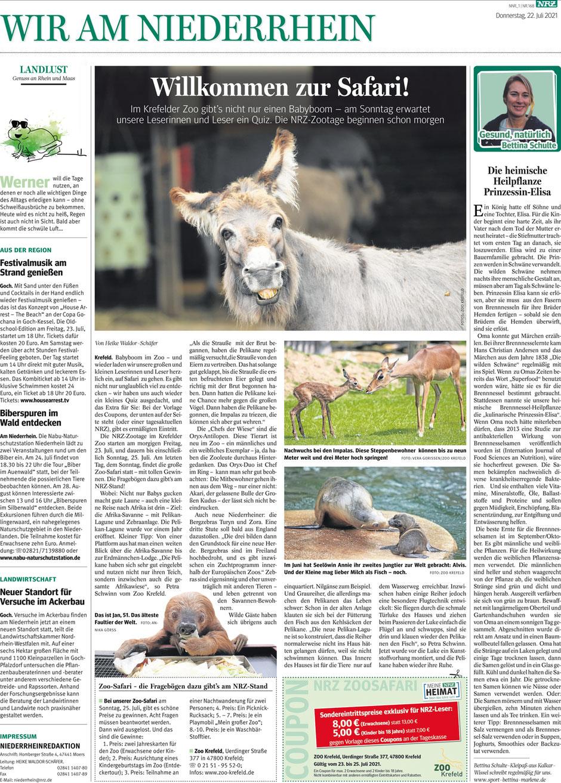 """Zeitungsartikel: """"Die heimische Heilpflanze """"Prinzessin-Elisa"""" von Bettina Schulte-Kleipaß."""