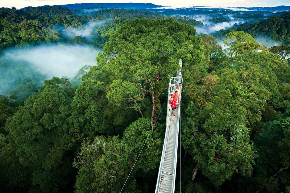 Die Costa Rica Reise führt in den Urwald. Eine hohe Hängebrücke in Costa Rica. Ausflüge in Costa Rica. Ferien in Costa Rica.