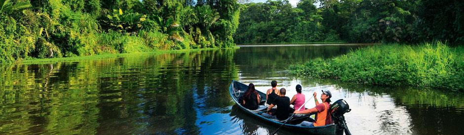 Regenwald in Costa Rica. Tiere und Pflanzen in Costa Rica. Schöne Strände Costa Rica. Schildkröten, Tortuguero Nationalpark Costa Rica. ica. Karibikküste Costa Rica.