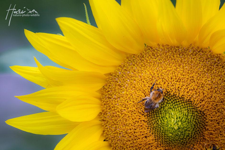 Weiss in Schwarz eingehüllte Blüten im ersten Licht...
