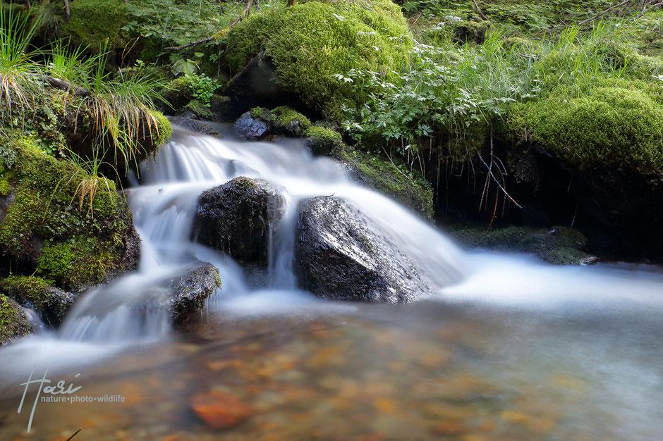 Latscher Almbach - Nationalpark Stilfserjoch