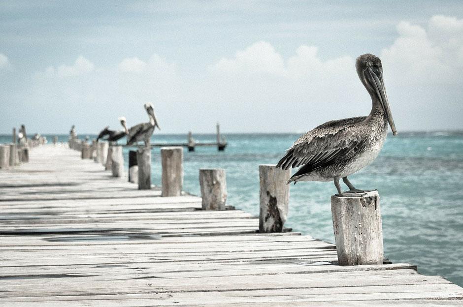 Pelikane sitzen auf Holzpfählen an einem Steg, der ins Meer hinausführt. Wie sie suchen wir im Gesundheitscoaching die Kraft der Verankerung und die Energie, jederzeit abheben zu können.