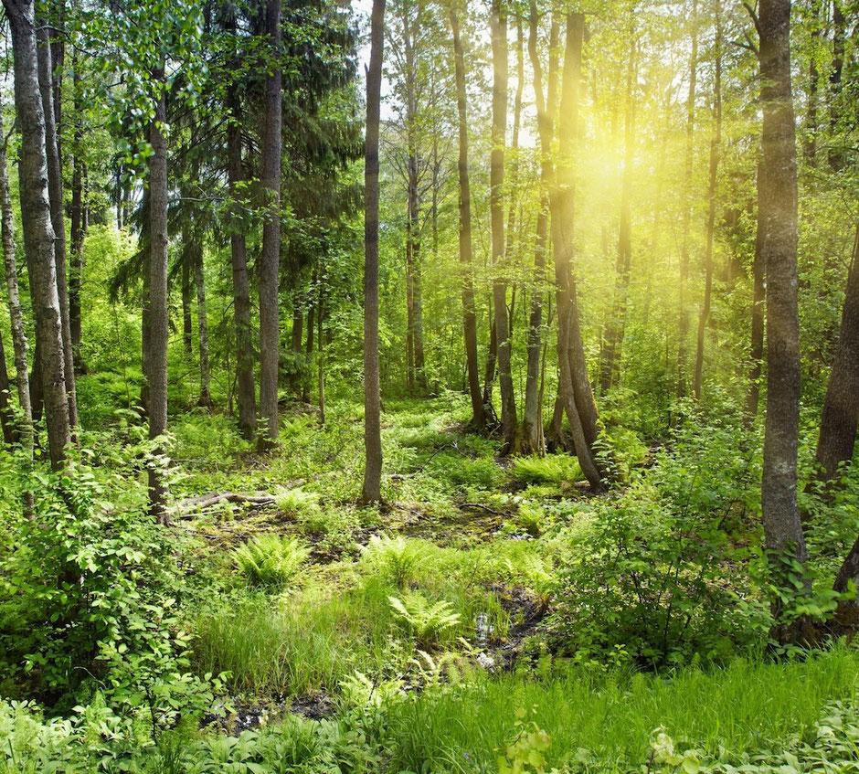 Das Tütle ist eine umweltfreundliche und nachhaltige Einkaufstüte und Biomülltüte. Das Tütle ist die wahrscheinlich umweltfreundlichste Tüte und hilft mit, unsere Umwelt auch für unsere Kinder und Enkelkinder lebenswert zu halten.